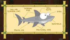 sharktoothmuseum7