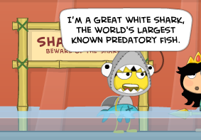 sharkmuseum