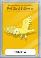 petbird
