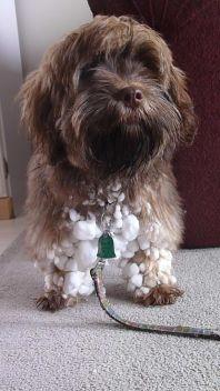 Master Mime's dog, Jessie
