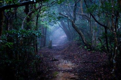 photo: Hoia Baciu Forest (dailystar.co.uk)
